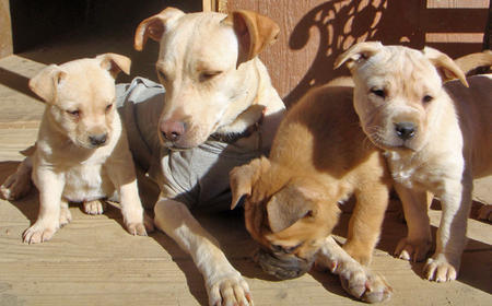Claire the Adoptable Mixed Breed and Puppies Pictures 722118