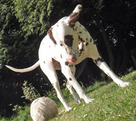 Coco the Dalmatian Pictures 851086