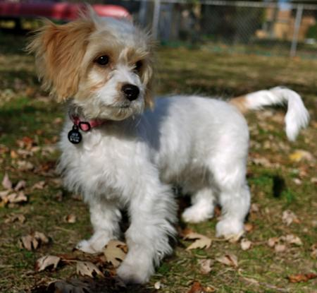 CoCo the Mixed Breed Pictures 780711