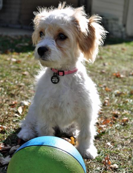 CoCo the Mixed Breed Pictures 780712