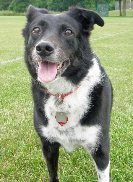 Cookie the Border Collie Mix Pictures 804697