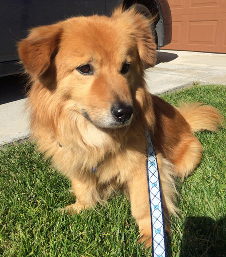Copper the Mixed Breed Pictures 1054071