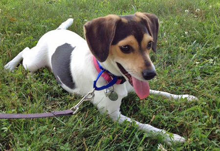 Daisy the Mixed Breed Pictures 1036095
