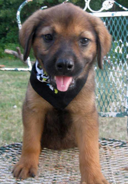 Destiny the Adoptable Shepherd Mix Pictures 805885