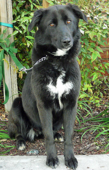 Diamond the Adoptable Mixed Breed Pictures 779671
