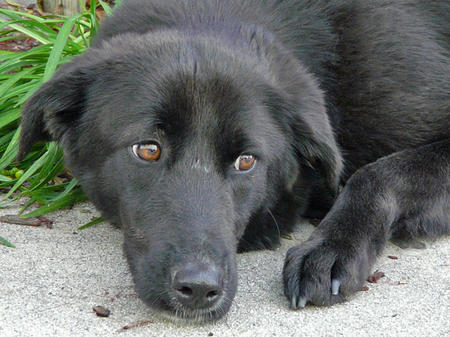 Diamond the Adoptable Mixed Breed Pictures 779672