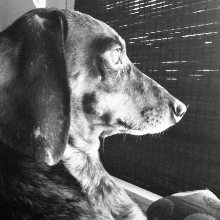 Dice the Dachshund  Pictures 1021019