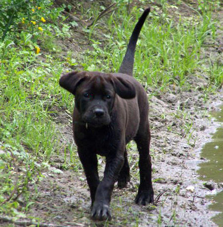 Dozer the Mixed Breed Pictures 877973