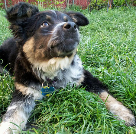 Dusty the Mixed Breed Pictures 1040203