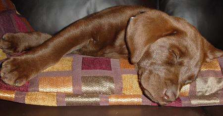 Echo the Labrador Mix Pictures 594379
