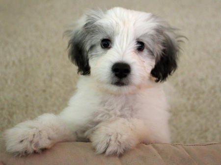 Einstein the Mixed Breed Pictures 998760