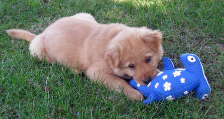 Emme Lu Who the Chow Mix Pictures 1013360