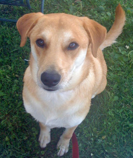 Ethel the Labrador Mix Pictures 834099