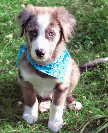 Everest the Border Collie Pictures 616779