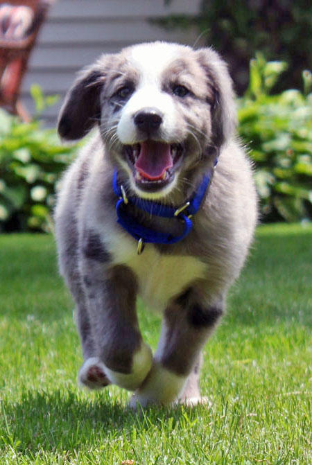 Everest the Border Collie Pictures 616772