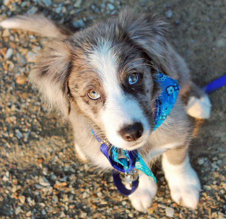Everest the Border Collie Pictures 616776
