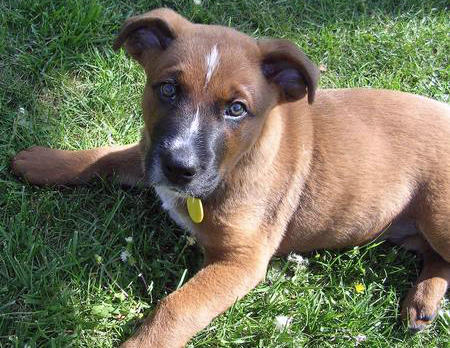 Ferra the Mixed Breed Pictures 705268