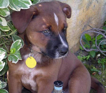 Ferra the Mixed Breed Pictures 705269