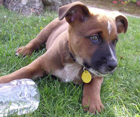 Ferra the Mixed Breed Pictures 705270