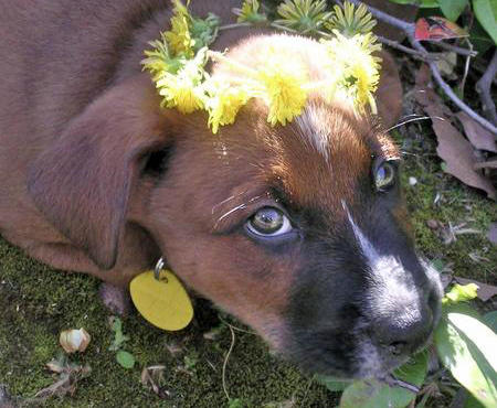 Ferra the Mixed Breed Pictures 705271