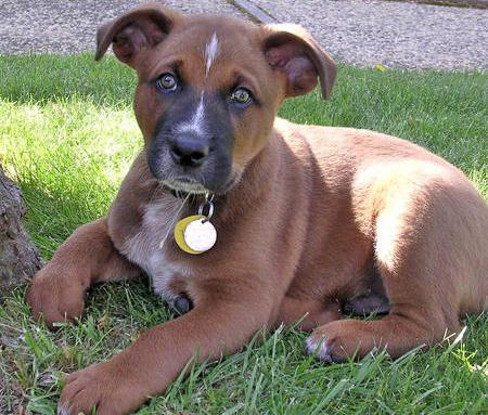 Ferra the Mixed Breed Pictures 705272