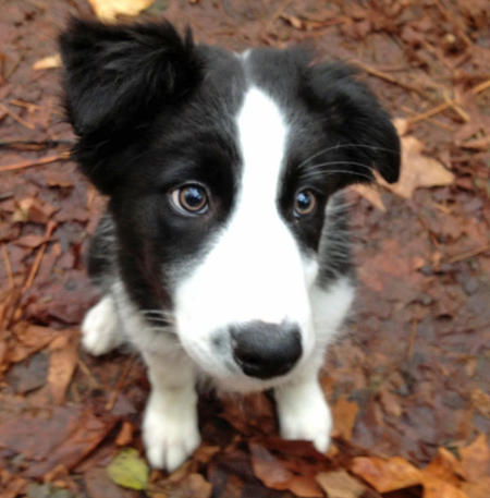 Finn the Border Collie Pictures 940784