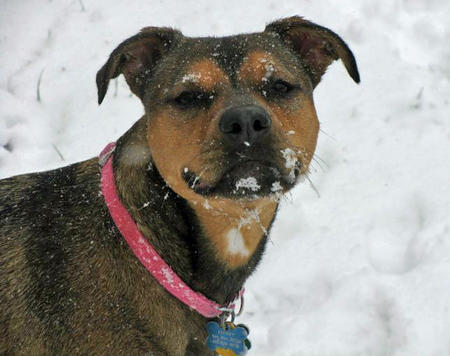 Franny the Mixed Breed Pictures 711769