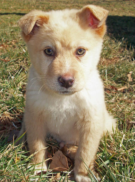 Gibbs the Mixed Breed Pictures 613429