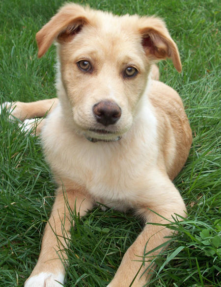 Gibbs the Mixed Breed Pictures 613431