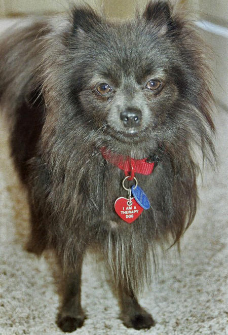 Gizmo the Pomeranian Pictures 855065