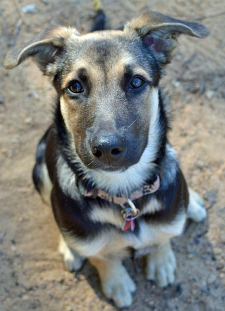 Gnudles the Shepherd Mix | Puppies | Daily Puppy