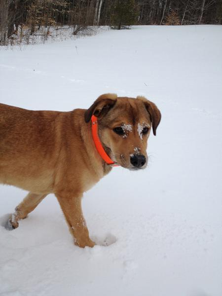 Gracie the Mixed Breed Pictures 777829
