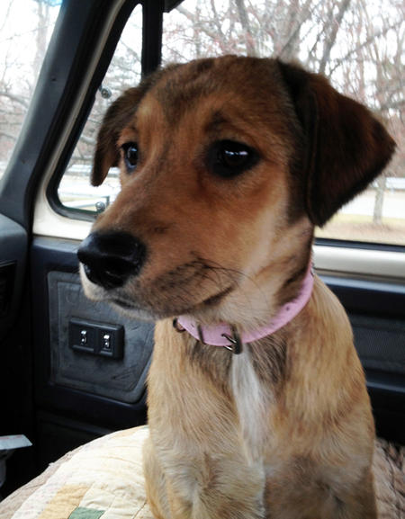 Gracie the Mixed Breed Pictures 777830