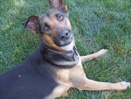 Griffin the German Shepherd Mix Pictures 617379
