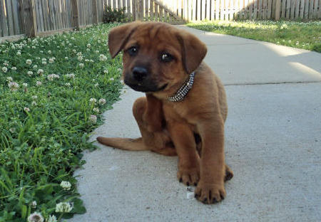Hank the Mixed Breed Pictures 1058649