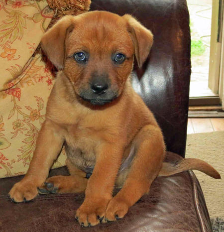 Hank the Mixed Breed Pictures 1058655