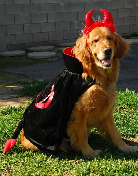 Happy Howl-a-Ween Grown Up Puppies Pictures 464636