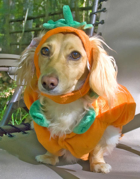 Happy Howl-a-Ween Grown Up Puppies Pictures 464627