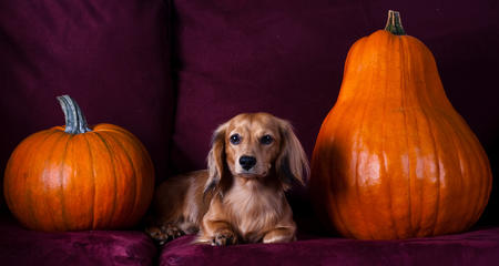 Happy Howl-a-Ween Grown Up Puppies Pictures 464631