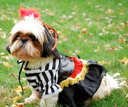 Happy Howl-a-Ween Grown Up Puppies Pictures 464633