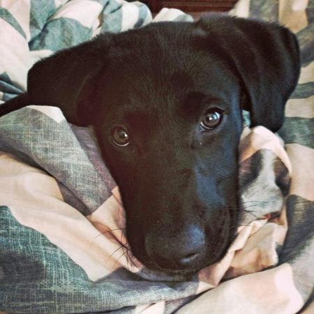 Harriet the Labrador Retriever Mix Pictures 1021421