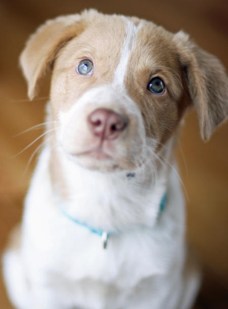 Hazel the Australian Shepherd Mix Pictures 784071