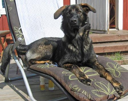 Hertta the Mixed Breed Pictures 975676