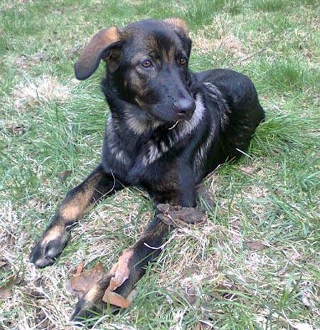 Hertta the Mixed Breed Pictures 975681