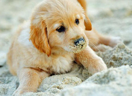 Holly the Golden Retriever Pictures 733969