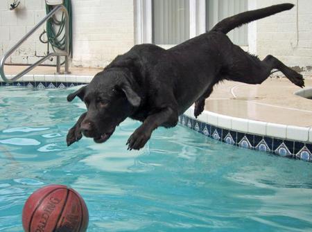 Hunter the Labrador Retriever Pictures 840261