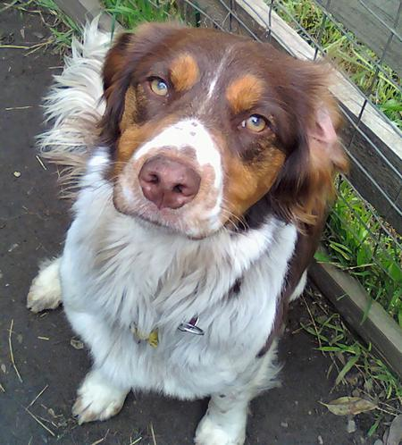 Indie the Brittany Pictures 663905