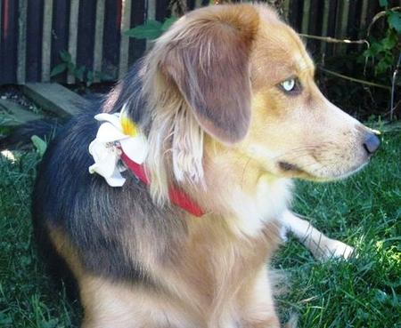 Indu the Mixed Breed Pictures 749106