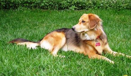 Indu the Mixed Breed Pictures 749107