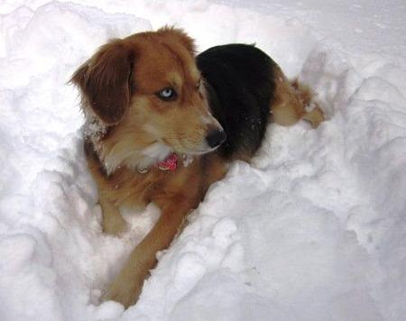 Indu the Mixed Breed Pictures 749108